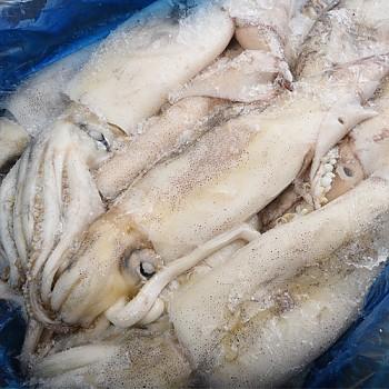 냉동오징어 2.7kg 내외 중국산 오징어 한박스